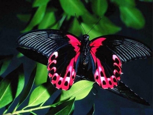 182486,xcitefun-beautiful-butterflies-butterflies-948118q