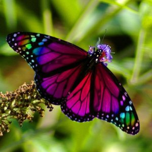 201311371742_butterflypic