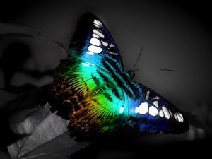 Beautiful_Butterfly_9