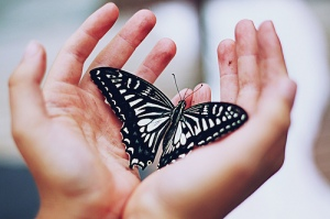 butterfly-hand-insect-love-pretty-Favim.com-414887