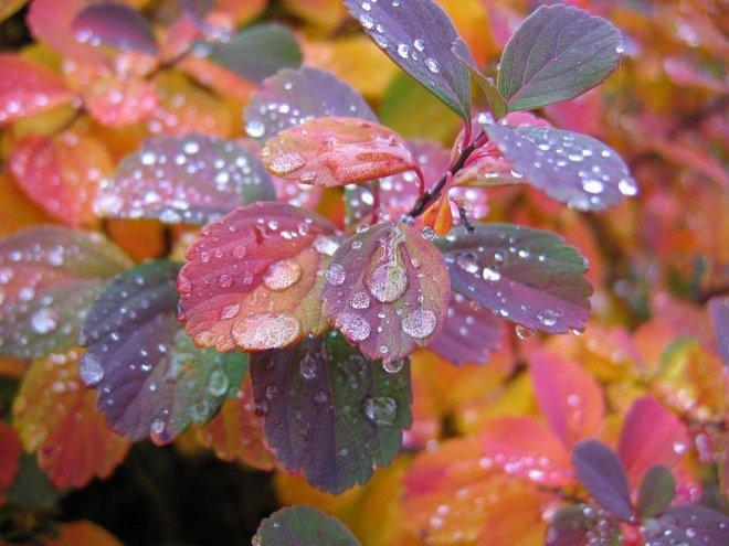 27-rain-drops.preview