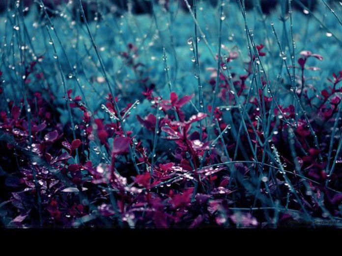 beautiful_photographs_of_rain_14