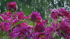 beautiful-rain-pictures-45-photos-16