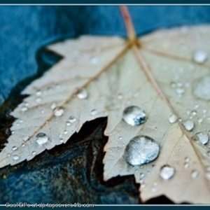 Drops-On-Leaf-Display-Picture