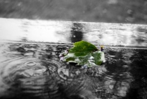 green_leaf_in_the_rain_205817