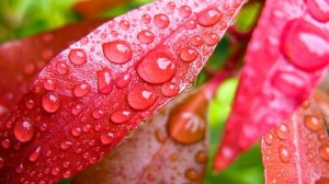 rain-drops-of-fairy-pink-52695_4.preview