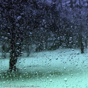 Rainy-Season-Drops-Display-Picture