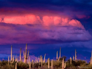 saguaros_and_the_spring_storm_saguaro_national-800x600